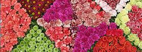 Festa da Flor da Madeira